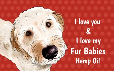 Hemp Oil for Pets Anxiety & Stiff Joints